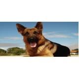 Cão de Segurança para Locação