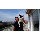 cão de segurança patrimonial
