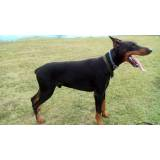 segurança com cães em SP Rio Pequeno