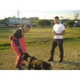 Locação de Cães de Segurança Adestrados