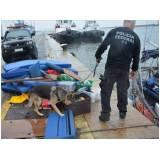 serviço especializado de busca de animal desaparecido Lapa