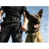 serviços de cães farejadores preço Cotia