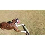 serviços de creche para cães Alphaville
