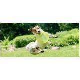serviços de creches para cachorros Aldeia da serra -