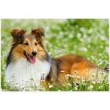 serviços de creches para cães Aldeia da serra -