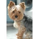 serviços de detetives para cães perdidos Bela Vista