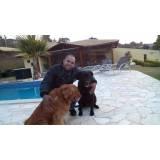 serviços de treinamento para cachorros Aldeia da serra -