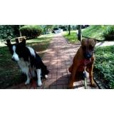 treinador de cães farejadores valor Osasco