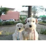 treinador de cães onde encontrar Carapicuíba