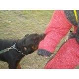treinador de cão de guarda Santana de Parnaíba