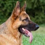 treinador para cachorros farejadores quanto custa Itapevi