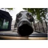treinador para cães farejadores preço Carapicuíba