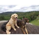 treinador para cães preço Granja Viana