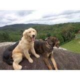 treinamento cachorro farejador Itapevi