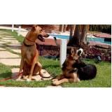 treinamento cães quanto custa Granja Viana