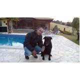 treinamento de cães de raça Santana de Parnaíba