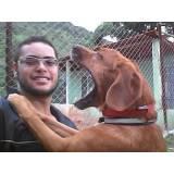 treinamento de cães em SP preço Aldeia da serra -