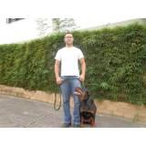 treinamento de cães em SP Morumbi