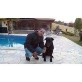 treinamento de cães farejadores de drogas Jaguaré