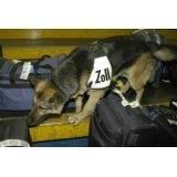 treinamento de cães farejadores valores Bom Retiro