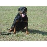 treinamento de cão de guarda preço Osasco