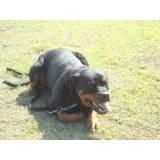 treinamento de cão de guarda quanto custa Jardim Bonfiglioli