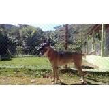 treinamento de cão de guarda Lapa