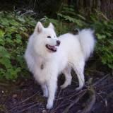 treinamento para cachorro de caça Santana de Parnaíba