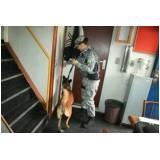 treinamento para cachorro farejador preço Bom Retiro