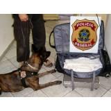 treinamento para cachorro farejador Aldeia da serra -