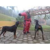 treinamento para cão de guarda preço Rio Pequeno