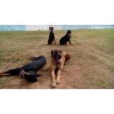 treinamento para cão de guarda Vila Olímpia
