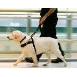 treinamento para cão farejador preço Jardim Bonfiglioli