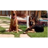 treinamento para cão farejador Alphaville