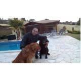 treinamentos de cães quanto custa Rio Pequeno