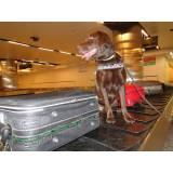treinar cão para farejar preço Cotia