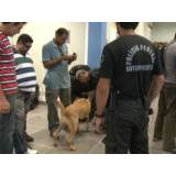 treinar um cachorro farejador preço Cotia