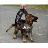 treinar um cachorro farejador Lapa
