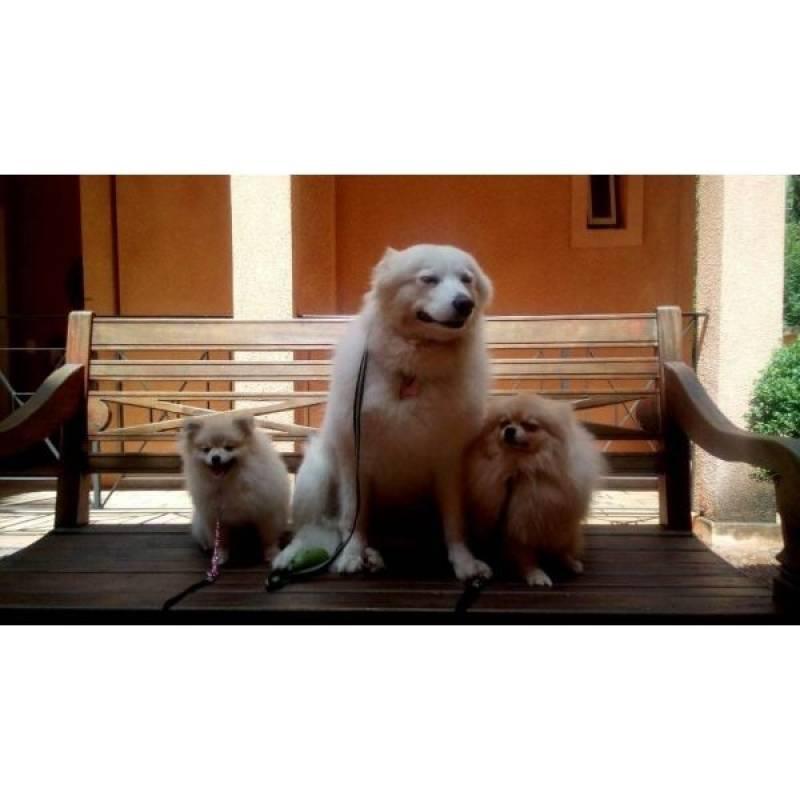 valor de adestrar cachorro agitado Alphaville