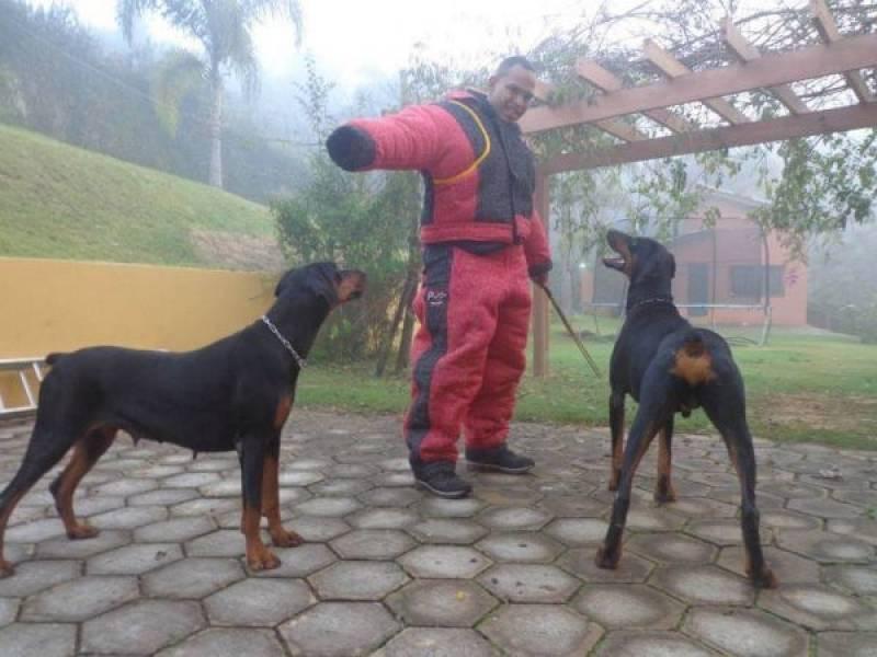 Treinamento para Cão de Guarda Preço Osasco - Treinador de Cão de Guarda