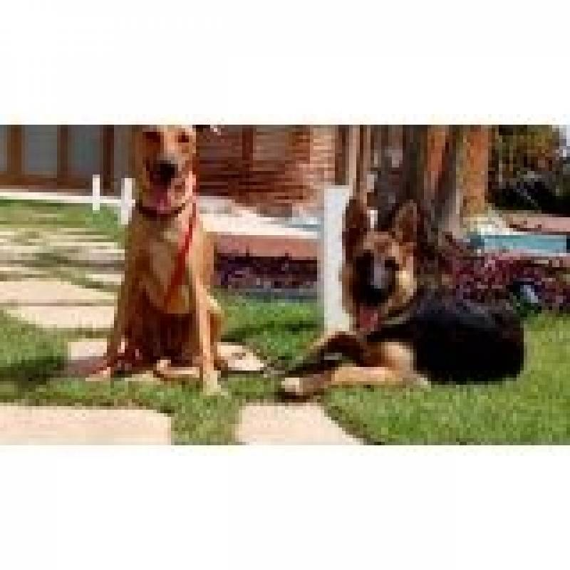 Treinamentos de Cão de Guarda Jaguaré - Treinador de Cão de Guarda