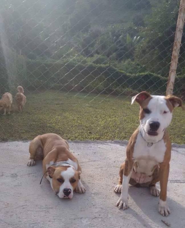 Adestrador de Cachorro Bom Retiro - Adestramento Intensivo