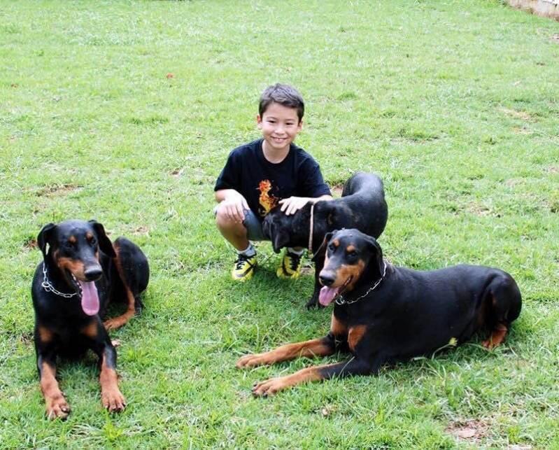 Onde Alugar Cachorro de Guarda Jaguaré - Cachorro para Alugar