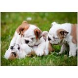 adestrador para filhotes de cachorro preço Butantã