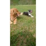 adestrador de cães golden retriever