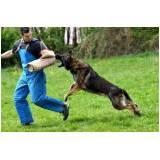 adestramento para cão de guarda