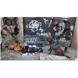 adestradores para cães de faro Higienópolis