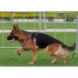 adestramento de cachorro  preço Granja Viana