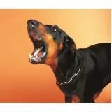 adestrador de cão bravo