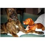 adestrador para cão anti social